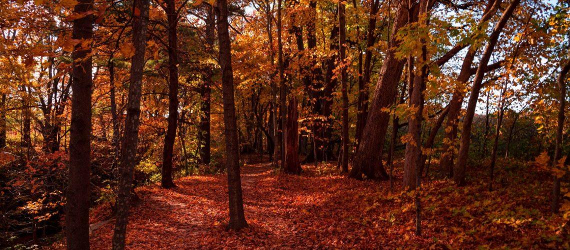 Canva - Autumn Season (1)