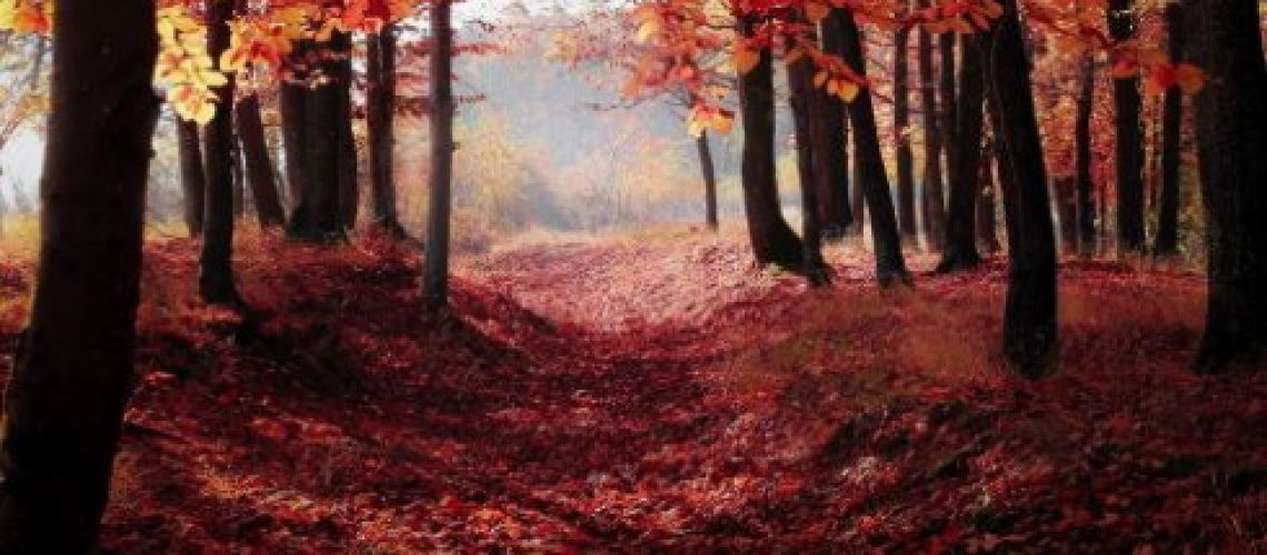 Canva - Red Autumn Trees
